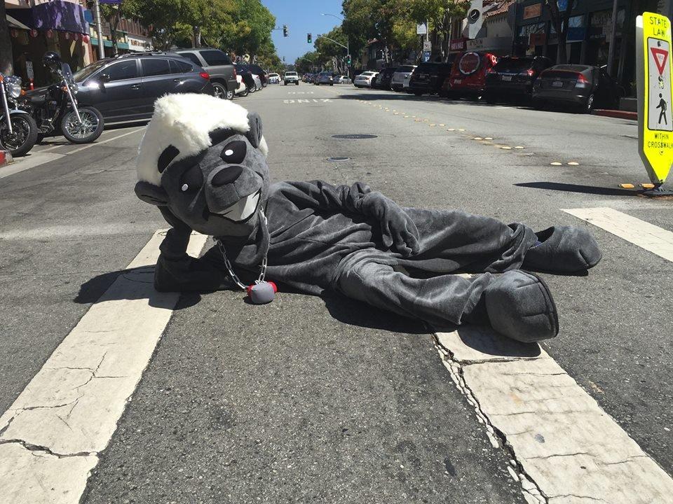 De honey badger, Timit's levende mascotte die ook in de video een hoofdrol zal spelen