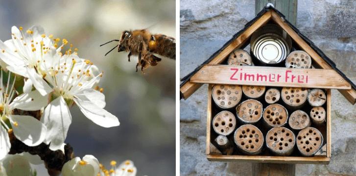 bijen insecten