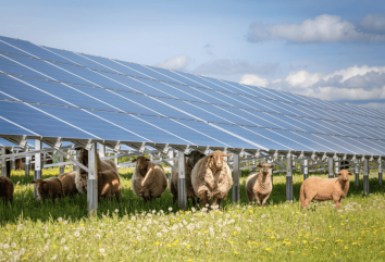 schapen solar panels zonnepanelen