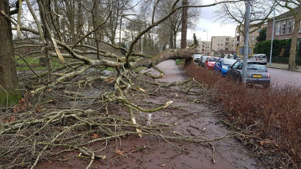 boom op fietspad storm