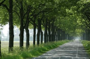 bomenstraat, bomen straat