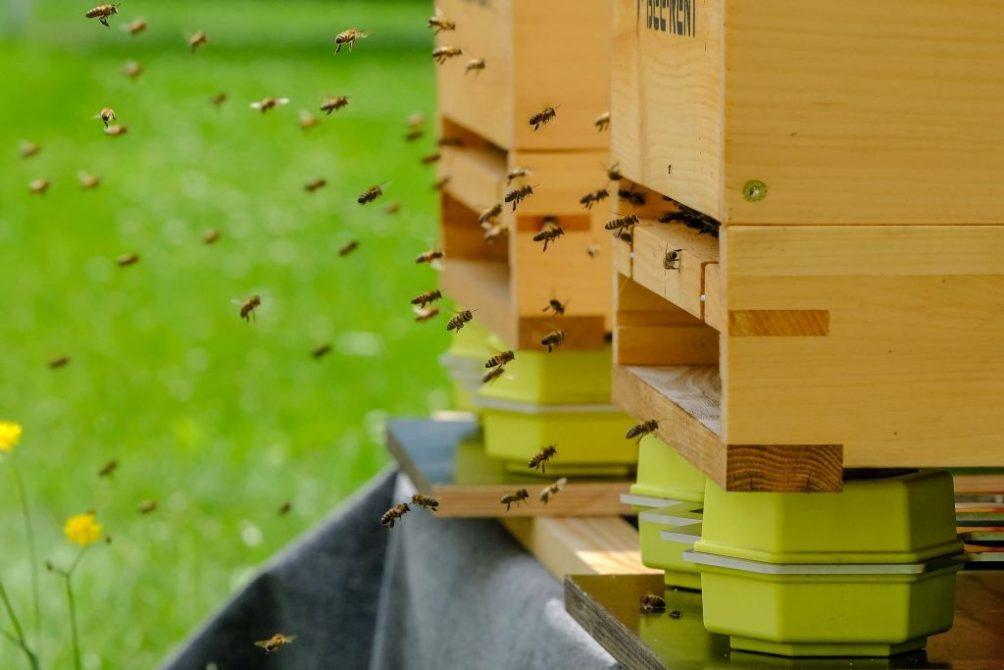 Bienen auf den Dächern der Deutschen Telekom