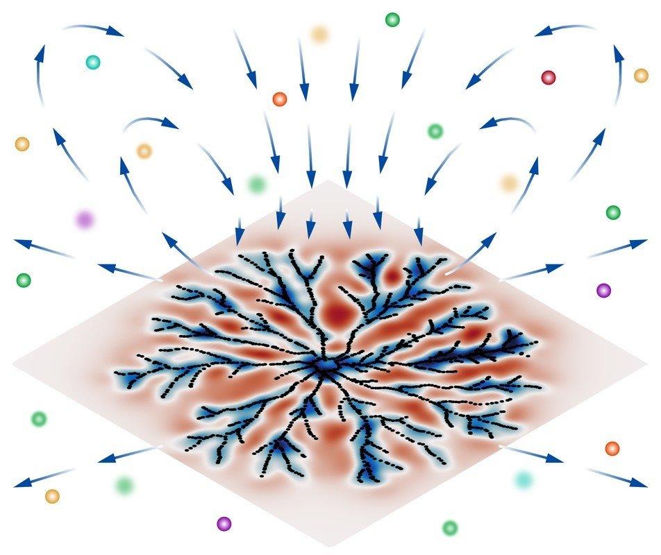 Mikroorgansismen, Bakterien