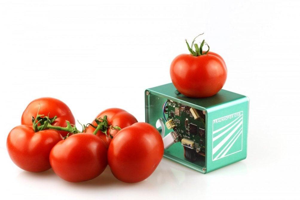 fraunhofer tomaat