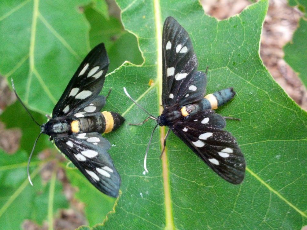 natuur vlinder