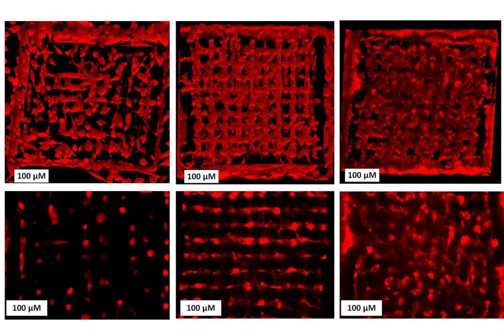 Bioprinting, Bio-Tinte, Zellforschung, 3D-Druck