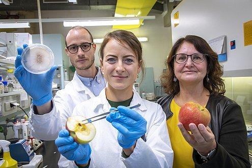 Haltbarkeit von Früchten, ökologische Methode, Mikrobiom