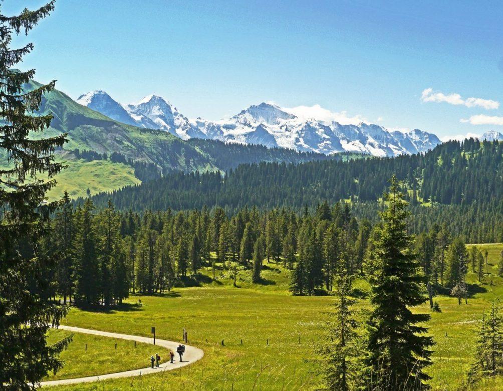 Wald, Waldes, Kohlenstoffdioxid, Globale Erwärmung