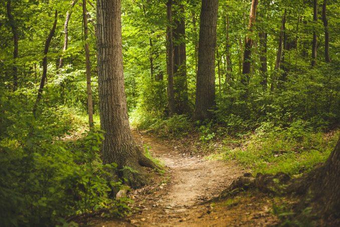 Stickstoff, Baumwachstum,