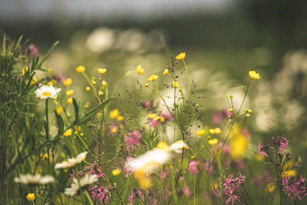 Wiesen und Weiden, Ackerfläche, biologische Vielfalt der Arten,,