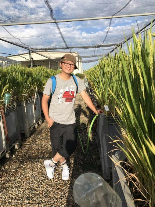 scwefelhaltige Arsenverbindungen, Reisfelder, Arsenverbindungen,