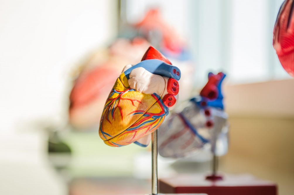 Kleber, Herzmuskelgewebe,