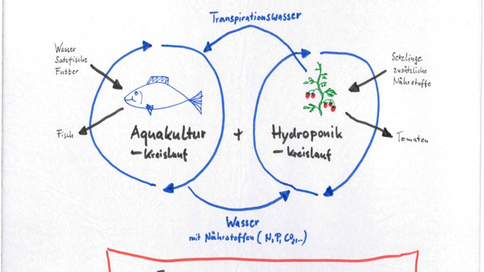 Aquaponik, Fische, Pflanzen, Ernährung