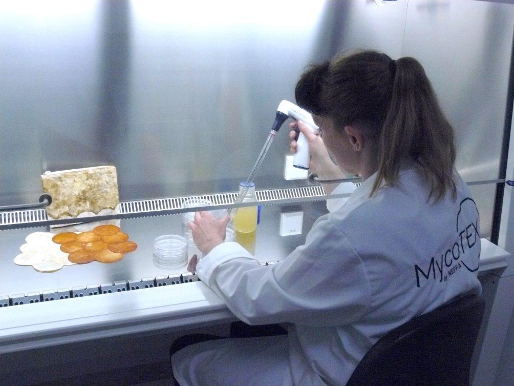 Myzelium, Pilzwurzeln