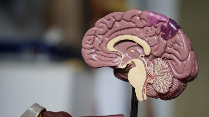 Mikrogliazellen, Gehirn, Neurowissenschaften,